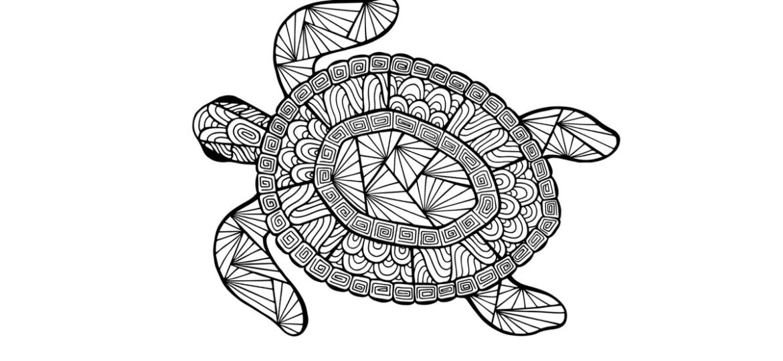 1200x900_turtle (Demo)